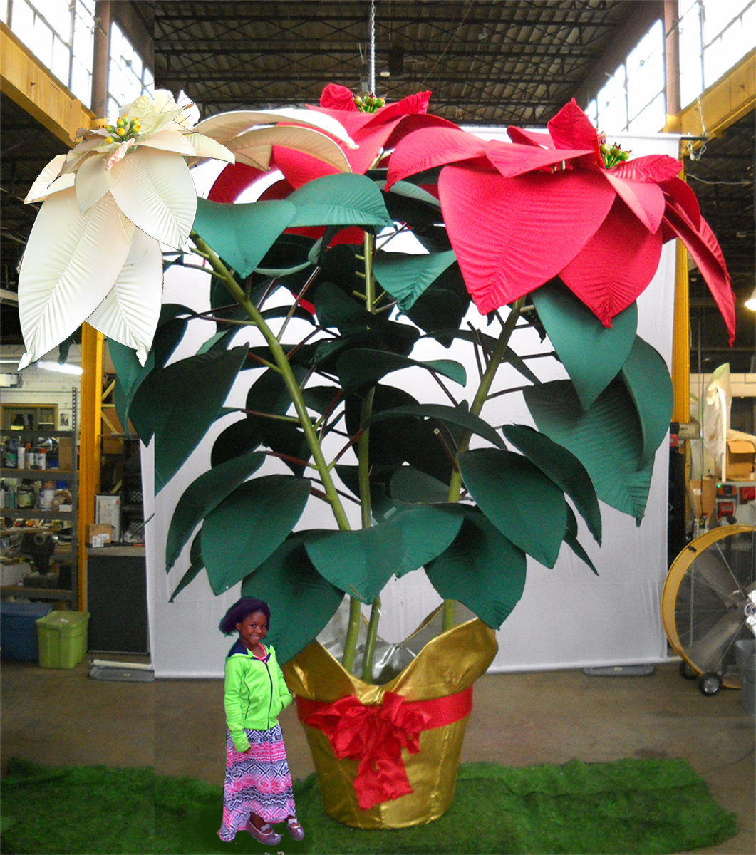 GIANT POINSETTIA 4